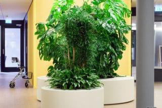 Grote kunststof plantenbak